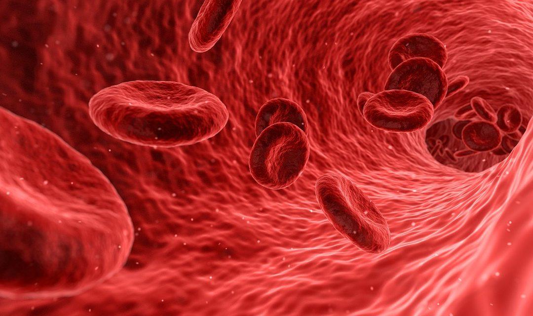 Medizin:  Hämoglobin und Ferritin – maßgebend für den Erfolg?